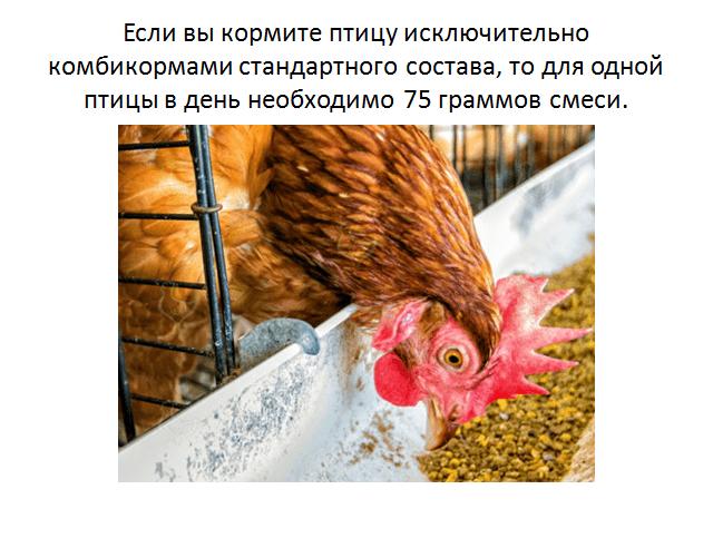 Кормление куриц несушек в домашних условиях различными видами корма