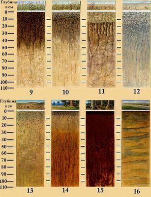 Что такое почва, состав, типы и виды, главное свойство почвы, строение, как образуется, обитатели почвенной среды, минерализация | tvercult.ru