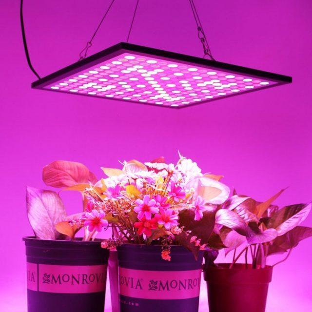 Лампы для растений: разновидности и советы по выбору