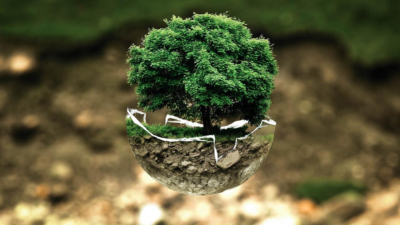 Сакура что это за дерево плоды - цветочный мир