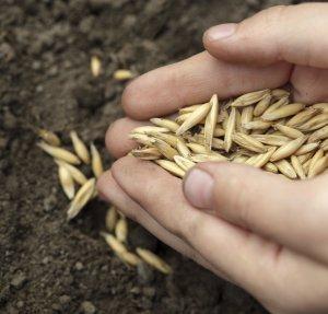 Что такое сидераты? зачем нужны, виды, как выбрать, как и когда сеять сидераты | сад и огород.ру