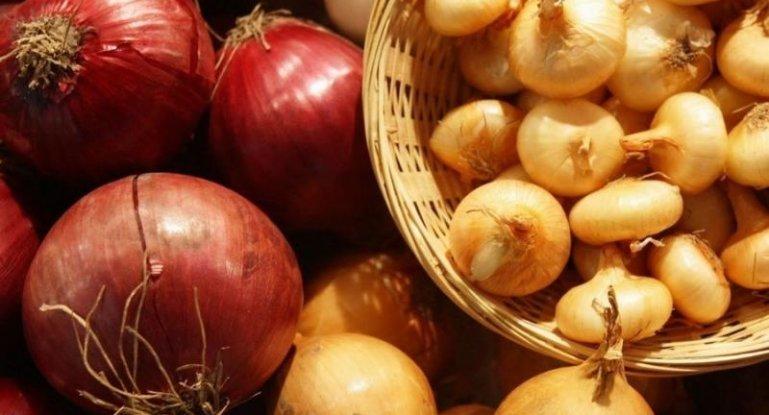 Секреты посадки лука под зиму осенью: сроки посадки и лучшие сорта, агротехника выращивания