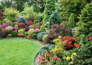 садовые кусты