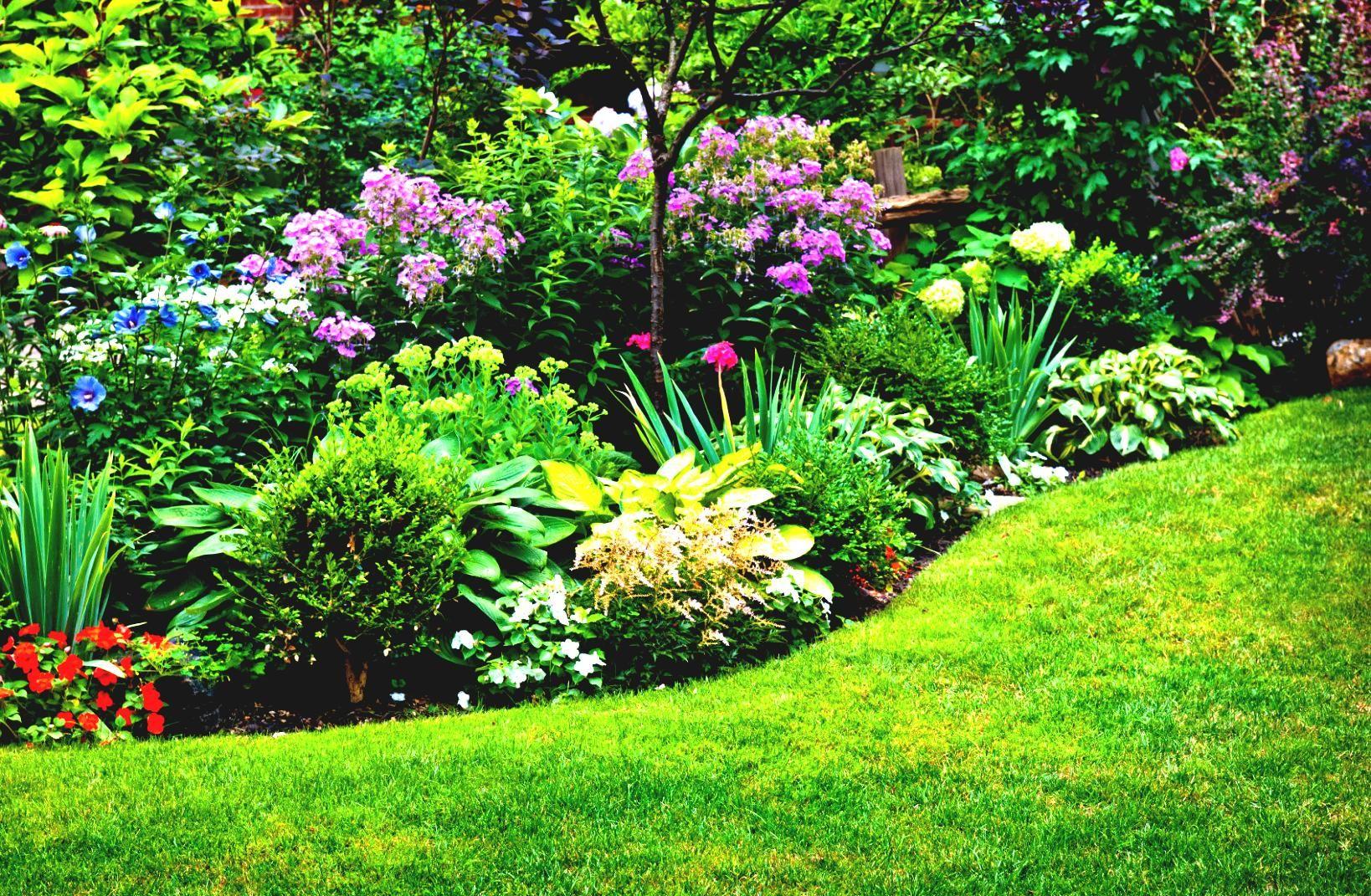 Клумба из многолетников непрерывного цветения: схемы цветника