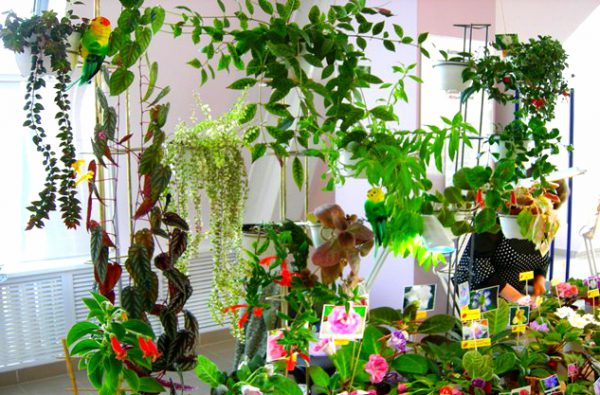 Самые популярные однолетние лианы для сада