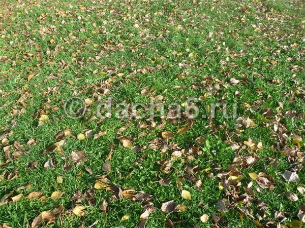Опавшие листья в саду: когда нужно убирать листву на даче – осенью или весной