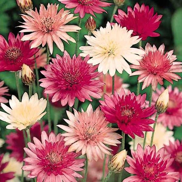 Лучшие растения-сухоцветы для зимних букетов