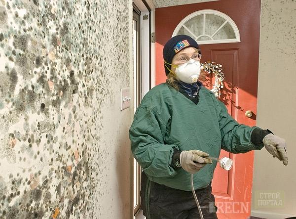 Эффективные грунтовки от плесени и грибка на стенах и других поверхностях