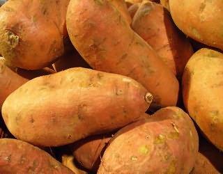 Батат или сладкий картофель: полезные свойства и вред для организма, как правильно выбрать при покупке, а также как приготовить? русский фермер