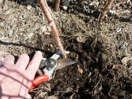 Подкормка малины осенью: как проводится, какие удобрения применять
