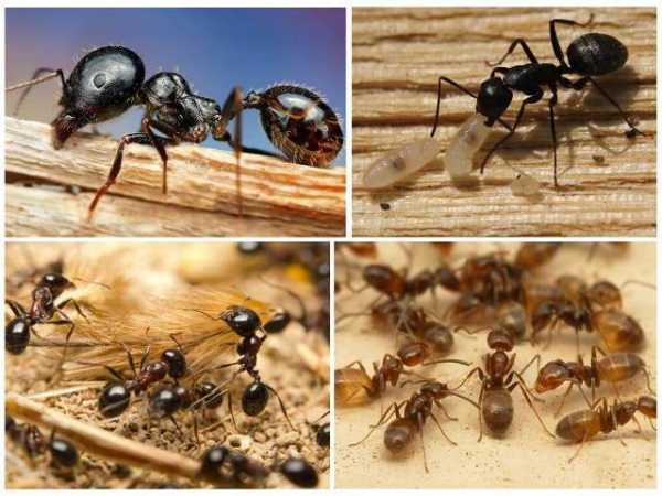 Как избавиться от муравьев на огороде навсегда: лучшие способы