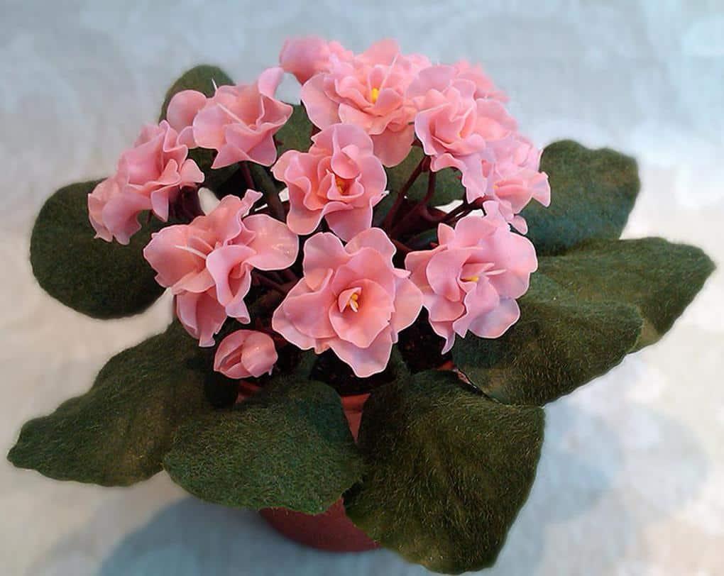 Цветок «женское счастье»: уход в домашних условия. что нужно для «женского счастья», что бы цвёл и радовал?