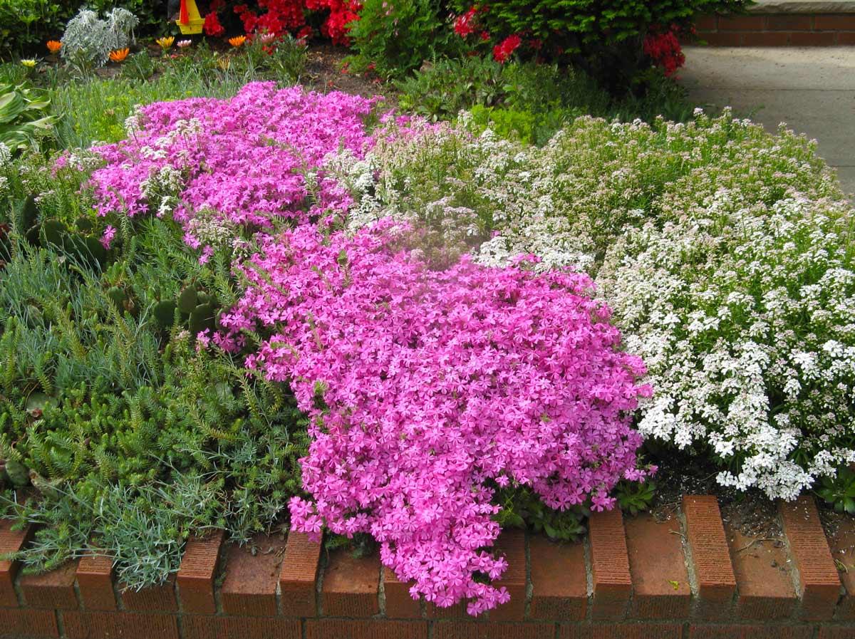 Топ-20 лучших почвопокровных многолетников для сада