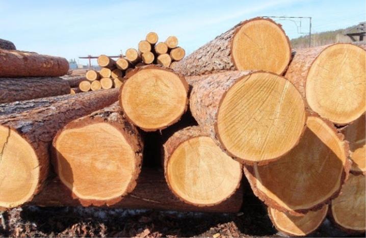 древесина определение