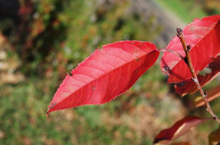 чем обработать деревья осенью от вредителей