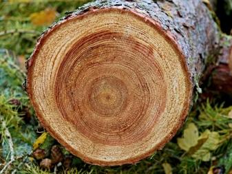 Дерево в интерьере: особенности применения материала, его преимущества и недостатки