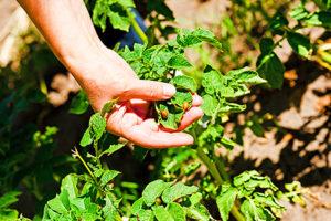Секреты органического земледелия на садовом участке