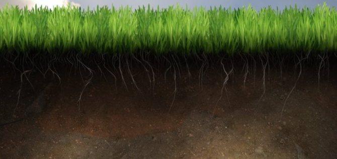 Типы почвы. классификация - дачный вопрос