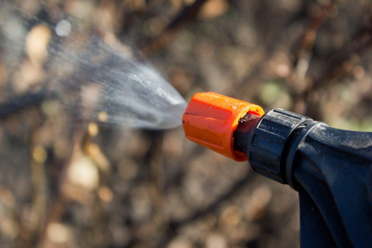 Обработка сада весной от болезней и вредителей: как и когда проводить, эффективные средства – сад и огород своими руками