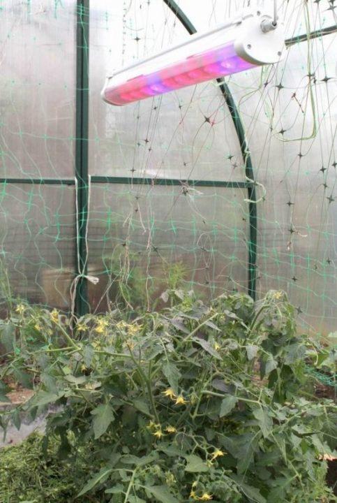 Лампы для растений (рассады)