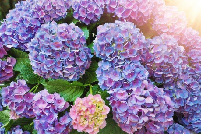 10 красивейших цветов – убийц :: инфониак