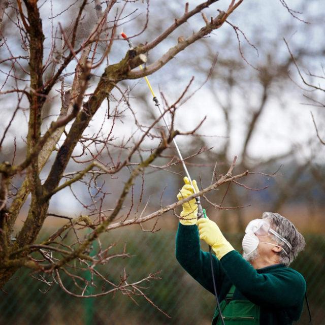 Подкормка яблонь летом и осенью: чем подкормить во время плодоношения