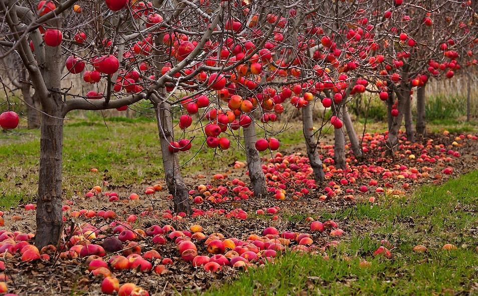 какие плодовые деревья посадить на участке