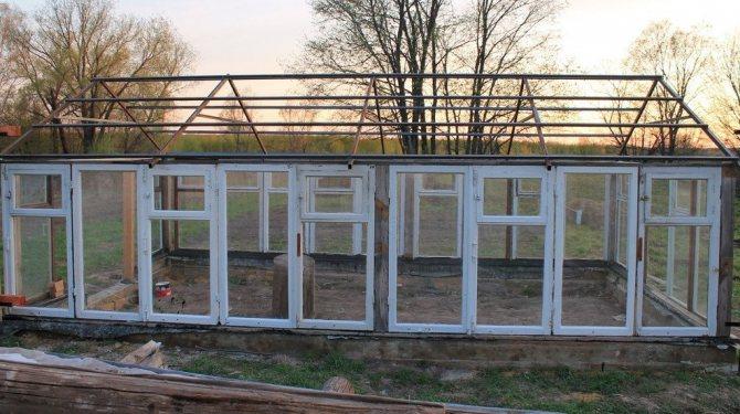 Теплица из оконных рам: как найти новое применение старым окнам?