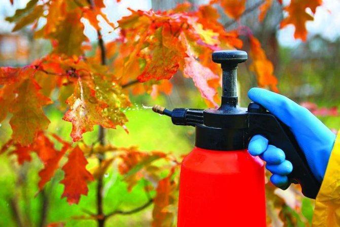 чем опрыскать сад осенью