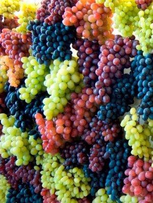 Виноград красохиной: описание, основные характеристики