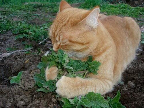 Как вывести блох и чем обработать квартиру, если в доме кот: лучшие средства от кошачьих паразитов