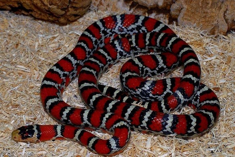 Змея гадюка: жизненный цикл, внешний вид и особенности укуса (95 фото)