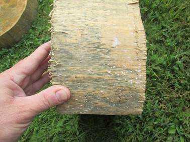 Отбеливатель для древесины - какой лучше выбрать? белизна от черноты и плесени