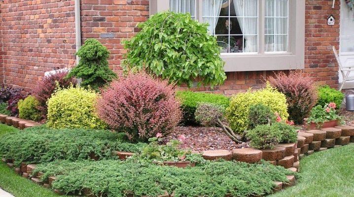 Красивые цветущие декоративные кустарники (60 фото): выбираем тенелюбивые многолетние кустарники для сада, которые цветут все лето. особенности низкорослых долгоцветущих растений и других видов