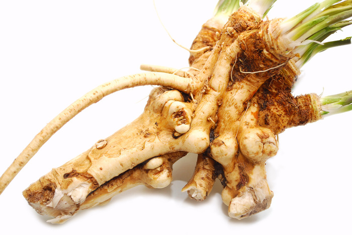 Выращивание хрена: размножение, посадка корнем осенью и уход в открытом грунте – дачные дела