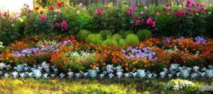Клумба непрерывного цветения из многолетников: схемы