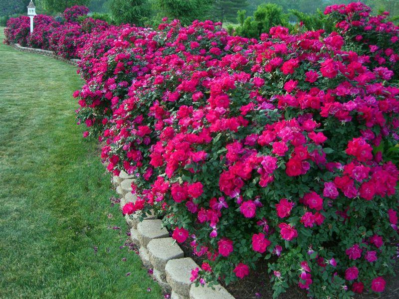 цветы на клумбе фото