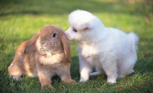 маленькие животные для дома