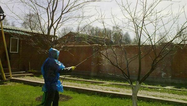 чем обработать деревья осенью от болезней