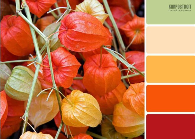 оранжевый с каким цветом сочетается