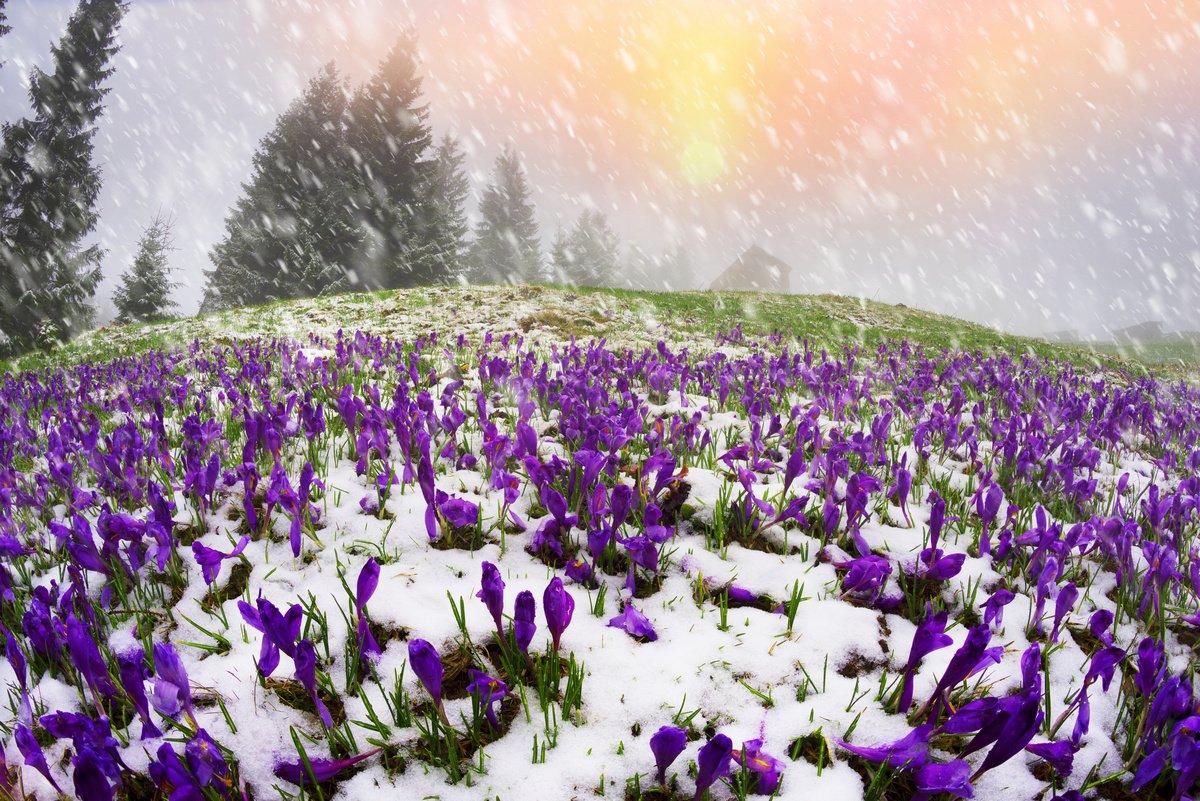 Что такое зоны морозостойкости? - flosium.ru
