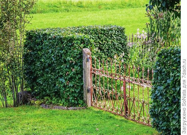 Живая изгородь – достоинства и недостатки, функции и задачи