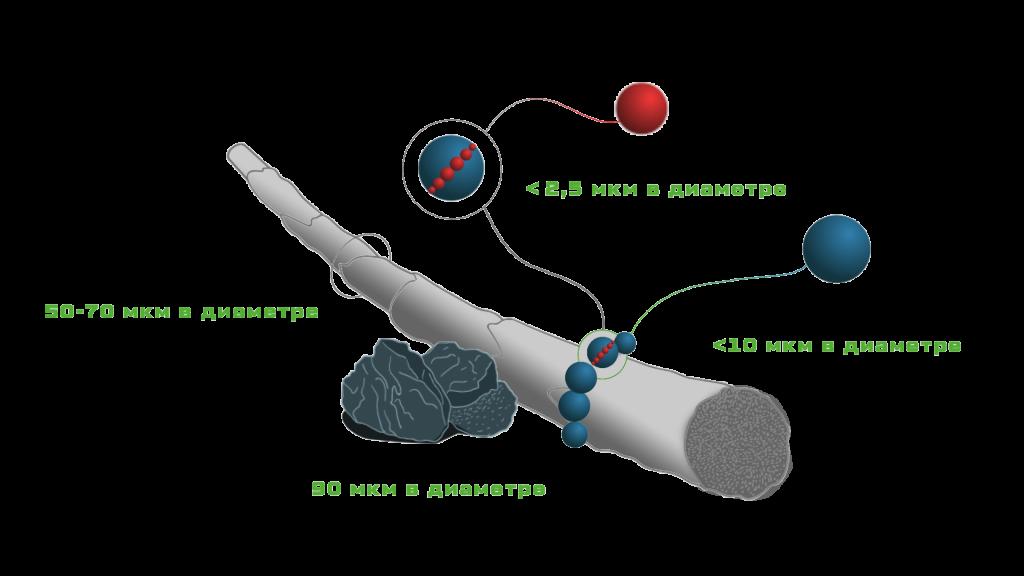 Как защитить воздух от загрязнения? рекомендации экологов
