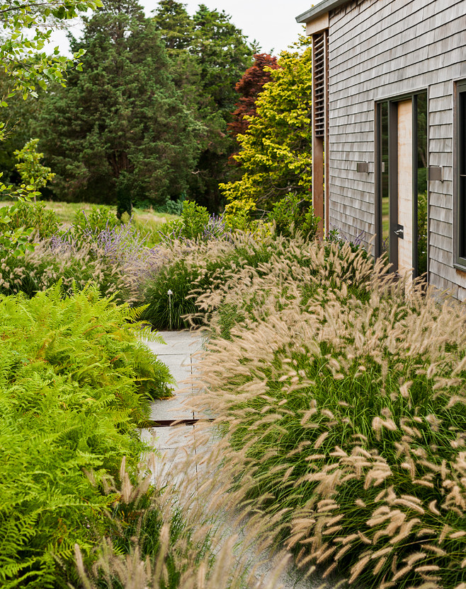 Декоративная трава для сада: ее описание, фото и названия
