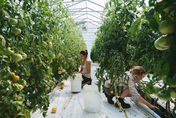 Что такое органическое земледелие? природное, или экологическое земледелие — ботаничка.ru