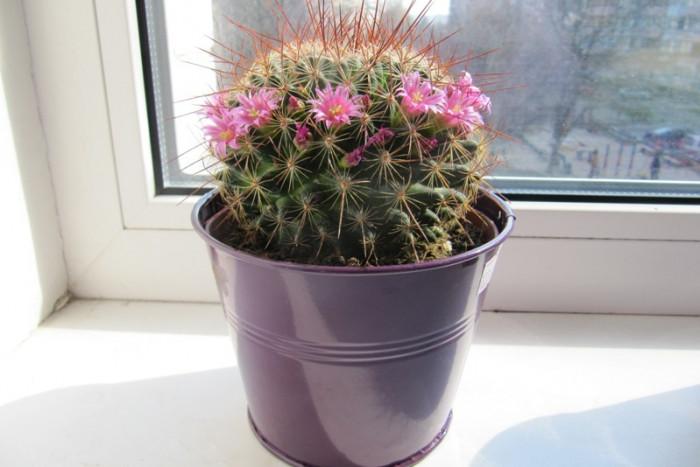 Какие 10 комнатных растений приносят счастье в дом