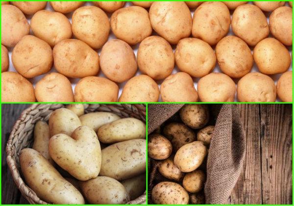 как хранить картошку в подвале