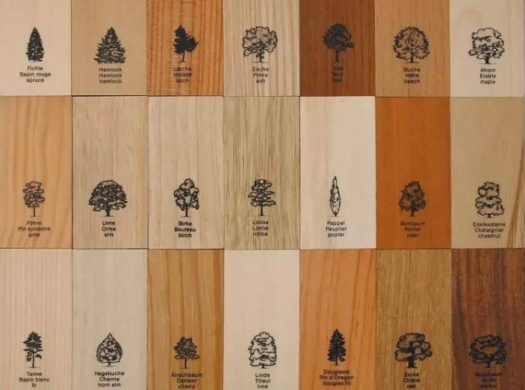 Древесина ясеня (13 фото): свойства и применение, цвет и структура, текстура и рисунок, строение. что из нее делают?