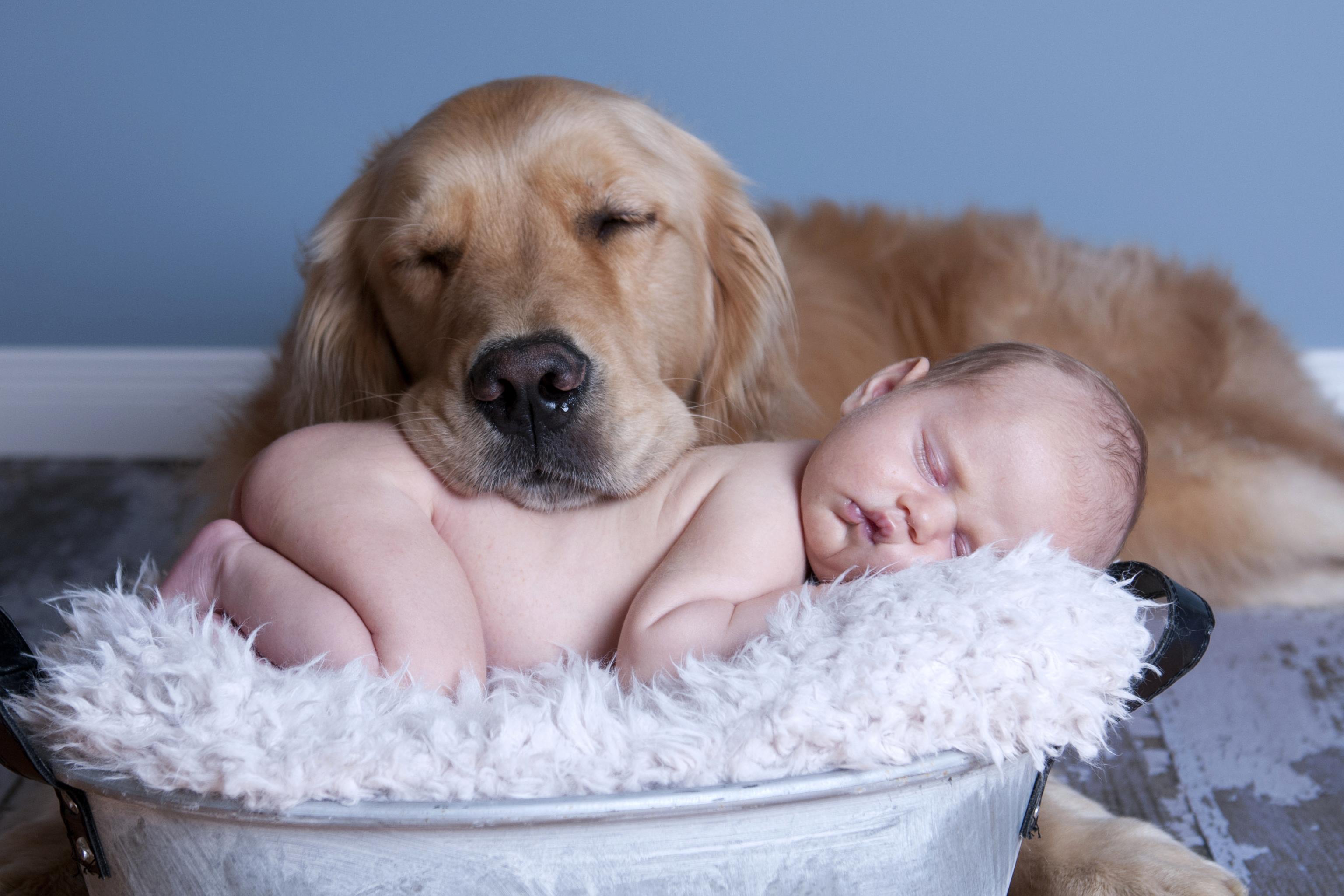 Лучшие семейные породы: топ 15 подборка самых подходящих собак
