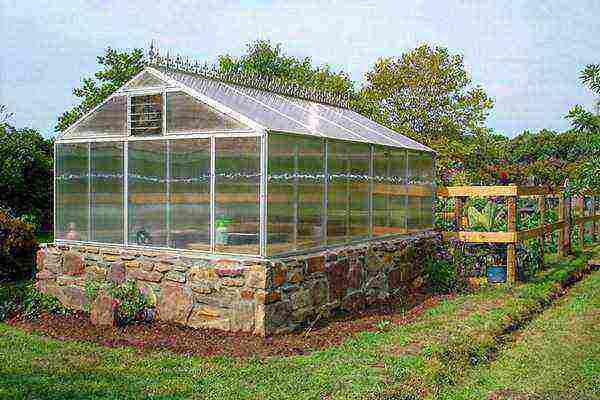 Правила и секреты расположения теплицы на даче, огороде и крышах по сторонам света
